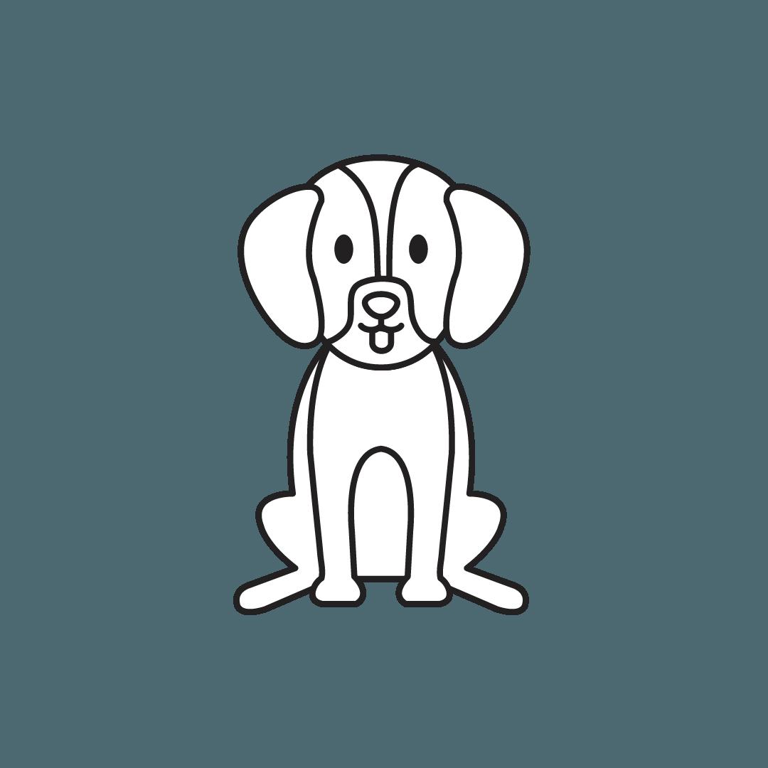 soins pour animaux, soins énergétiques holistiques Djamila Rey Genève Meyrin